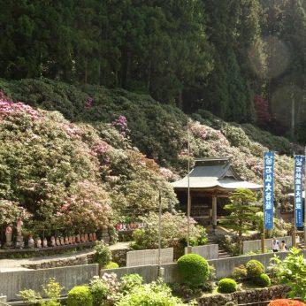 お遍路日記1:第60番札所 石鉄山福智院横峰寺