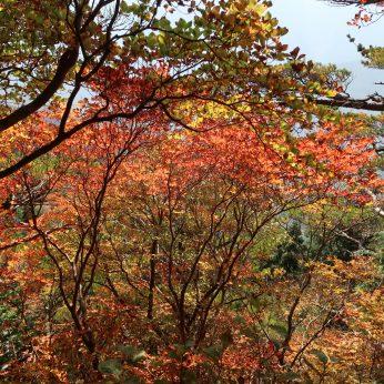 紅葉を求めて綱繰山へ