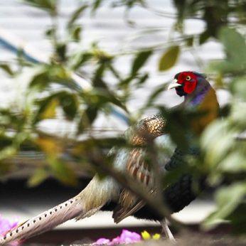 新居浜の野鳥